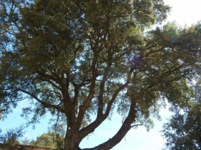 Ciudad Encantada de Tamajón - Retiendas - Almiruete;viajes aventura; tejo arbol